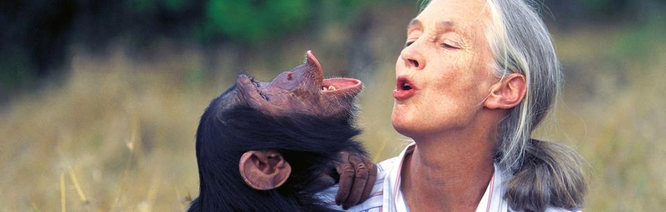 85 éves Jane Goodall, a környezetvédelem királynője